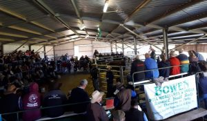 2017 BOWEN Bull Sale Report
